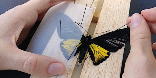 DIY Butterfly Pinning Workshop