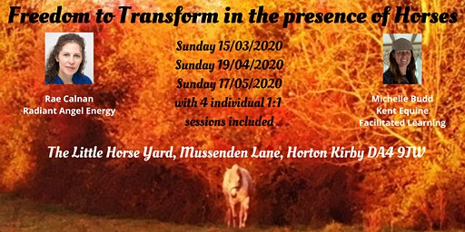 Freedom to Transform in the presence of Horses
