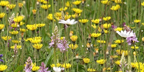Introduction to Wild Flowers for Beginners tickets