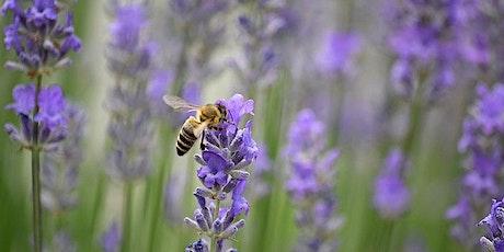 Beekeeping Workshop tickets
