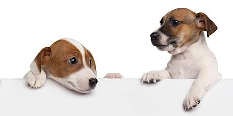 Avoir un chien calme, avec peu d'effort ! billets