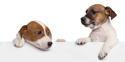 Avoir un chien calme, avec peu d'effort !