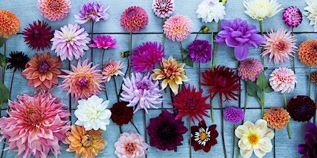 Dahlias for the Cut Flower Garden tickets