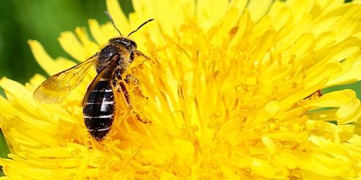Beekeeping for Beginners Workshop