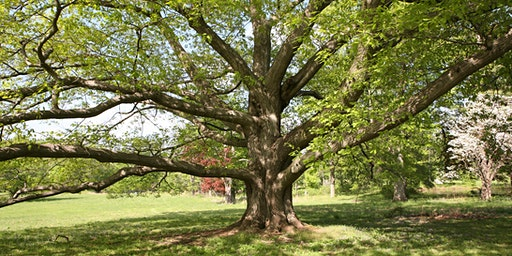 Big Tree Hike