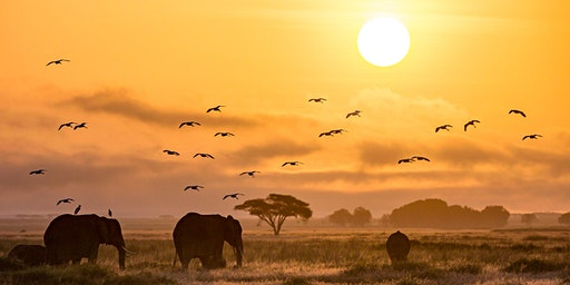The Art and Science of Wildlife Photography with Gerry Van der Walt - SF