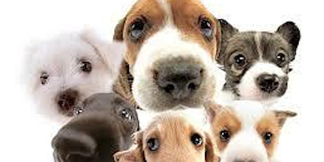 Puppy Training Course - West Malling  tickets