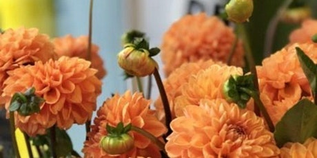 Dahlias and Donuts at Cider Hill Farm with Alice's Table tickets