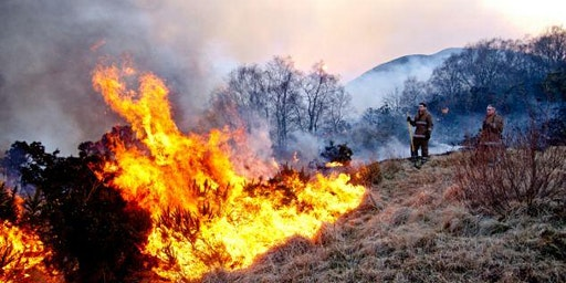 Preventing Wildfires, learning from experience