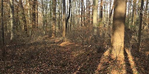 Walking in a Winter Wonderland, at Rushton Woods Preserve