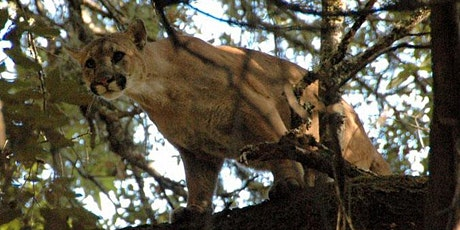 Cameras and Cougars: 10 years of Mountain Lion Research and Conservation tickets