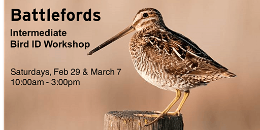 Battlefords - Intermediate Bird ID Workshop