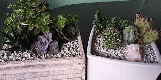 Cactus white pot arrangement