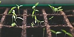 Seed Starting Class