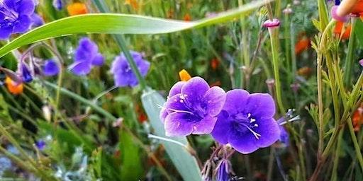 Hiking-with-Friends ~ Wildflowers Poppie Fields HiKe