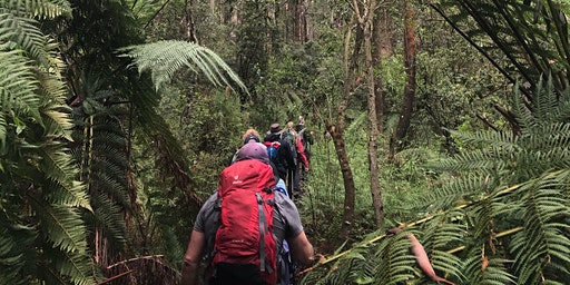 FREE Trek Tanglefoot Track, Toolangi, Sunday 22nd March, 2020