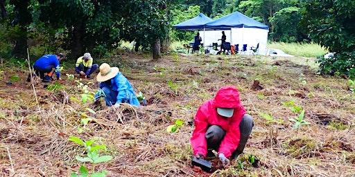Cassowary Tree Planting Australia Day