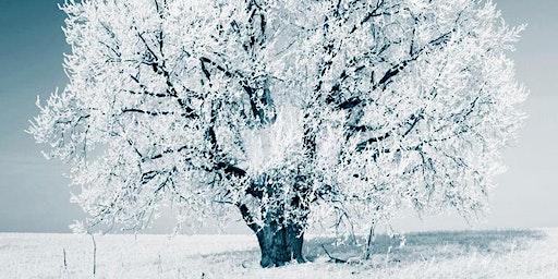 Winter Stillness: Deep Nourishment for Body, Mind and Heart