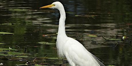 World Wetlands Day Bird Walk tickets