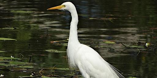 World Wetlands Day Bird Walk