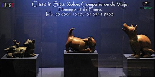 Clase in Situ: Xolos: compañeros de viaje.
