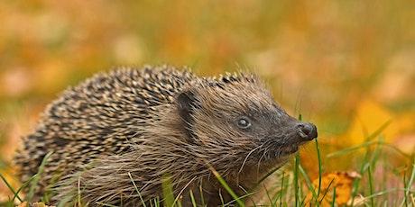 Basic Hedgehog Care - Foxburrow Farm  (EWC 2806) tickets
