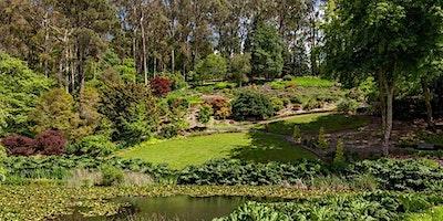 Social group Walk and Talk in Mount Lofty Botanic Gardens  -1 hour