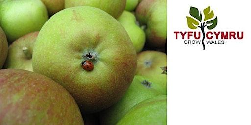 Tyfu Cymru Top Fruit Network Pruning Workshop