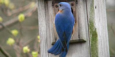 Bluebird Nest Monitoring Program Kickoff
