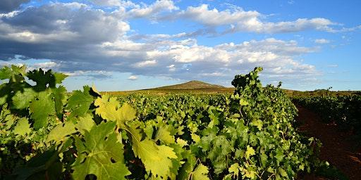 Cata Maridada de Vino de Bodega Sierra Norte - Descubre el Levante Vinícola