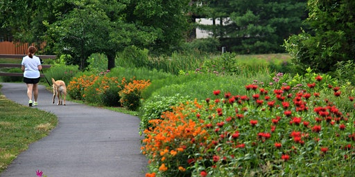 Amaze your Friends and Impress Your HOA with Native Plants