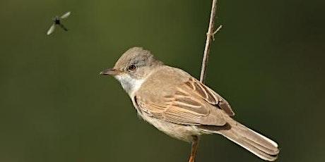Late Spring bird ID at Lackford Lakes (EWC 2806) tickets