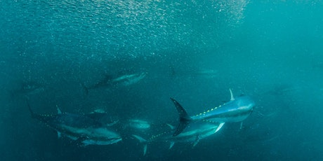 Atlantic bluefin tuna: return of the giant tunny? tickets