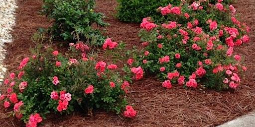 Spring CEU Class for License Renewal - Landscape Pest Management