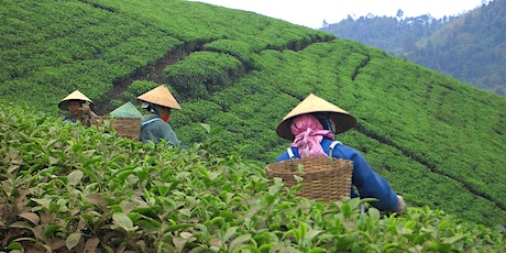 ALL ABOUT CHINESE GREEN TEAS tickets