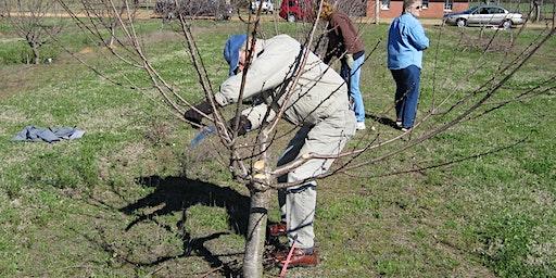 Fruit Tree Pruning 101