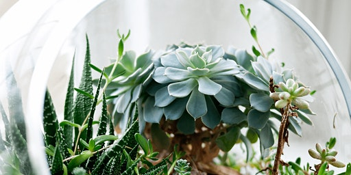 LEARN HOW TO MAKE A TERRARIUM WITH JO HICKS —  26 JAN