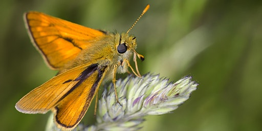 Wildlife Gardening: Magnificent Moths