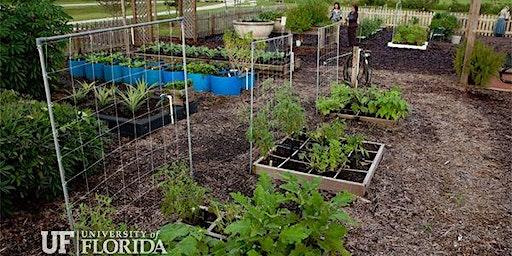 Homeowner Vegetable Gardening 201- Beyond The Basics
