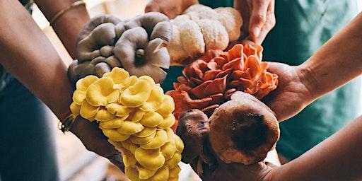Online Mushroom Farming Series