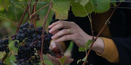 Harvest Day at Bluebell Vineyard