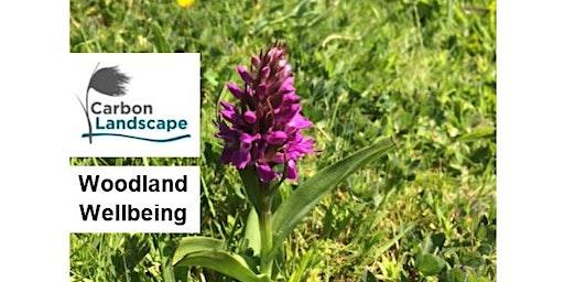 Woodland Wellbeing - 6 week course