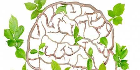 Tinctures for Brain Health
