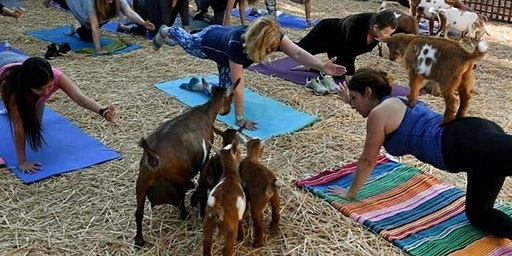 Baby Goat Yoga Valentine Party by Lavenderwood Yoga at Eden Gardens
