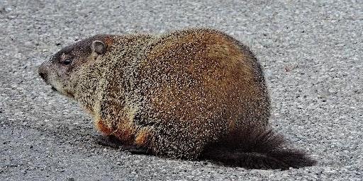 Junior Explorer – Groundhog Day