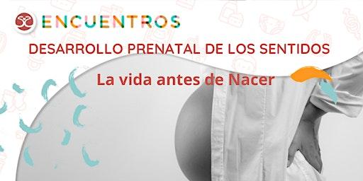 Desarrollo prenatal de los sentidos -La vida antes de nacer