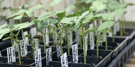 Spring Vegetable Seed Starting Class tickets