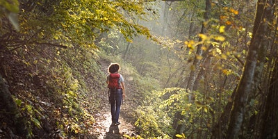 Forest Therapy: The Healing Power of Nature