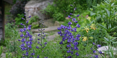 Native Plant Horticulture with Liz Stauffer (Non-member Registration) tickets