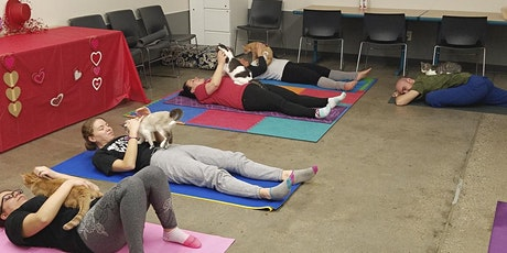 Kitty Yoga in South Haven, MI tickets